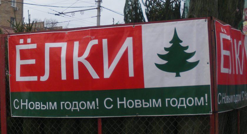 Белорусские лесхозы подготовили для продажи 115 тыс. новогодних елок