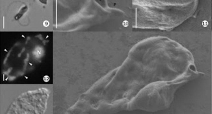 Ученые обнаружили самый неуловимый организм наЗемле