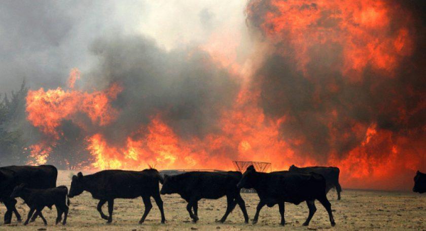Из-за пожара наферме вСолигорском районе эвакуировали неменее 200 коров
