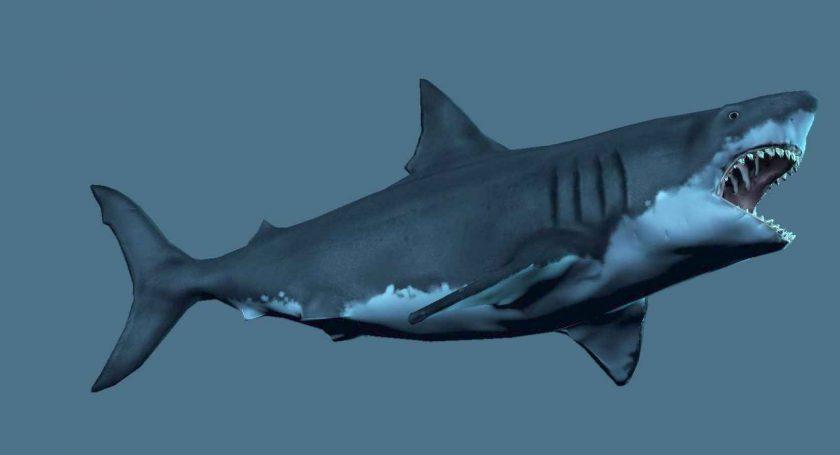 ВМексике отыскали останки древней колоссальной акулы