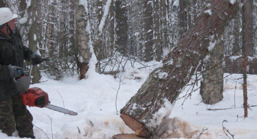 Гражданин Березовского района умер при заготовке древесины