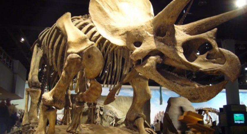 Ученые из Канады нашли в костях динозавра Юрского периода следы белков