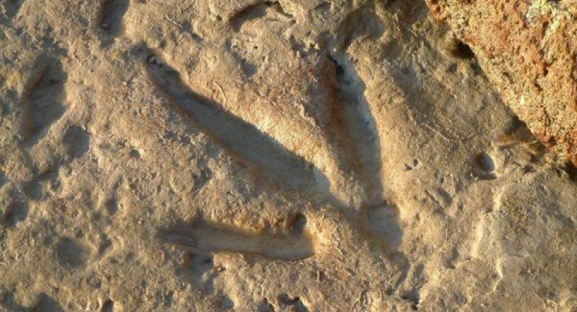 На северо-востоке Китая археологи обнаружили следы динозавров