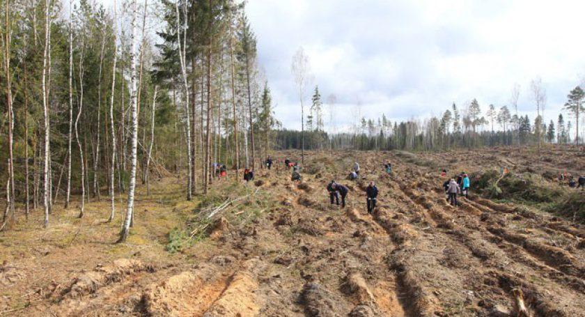 ВРеспублике Беларусь прошла акция «Неделя леса»
