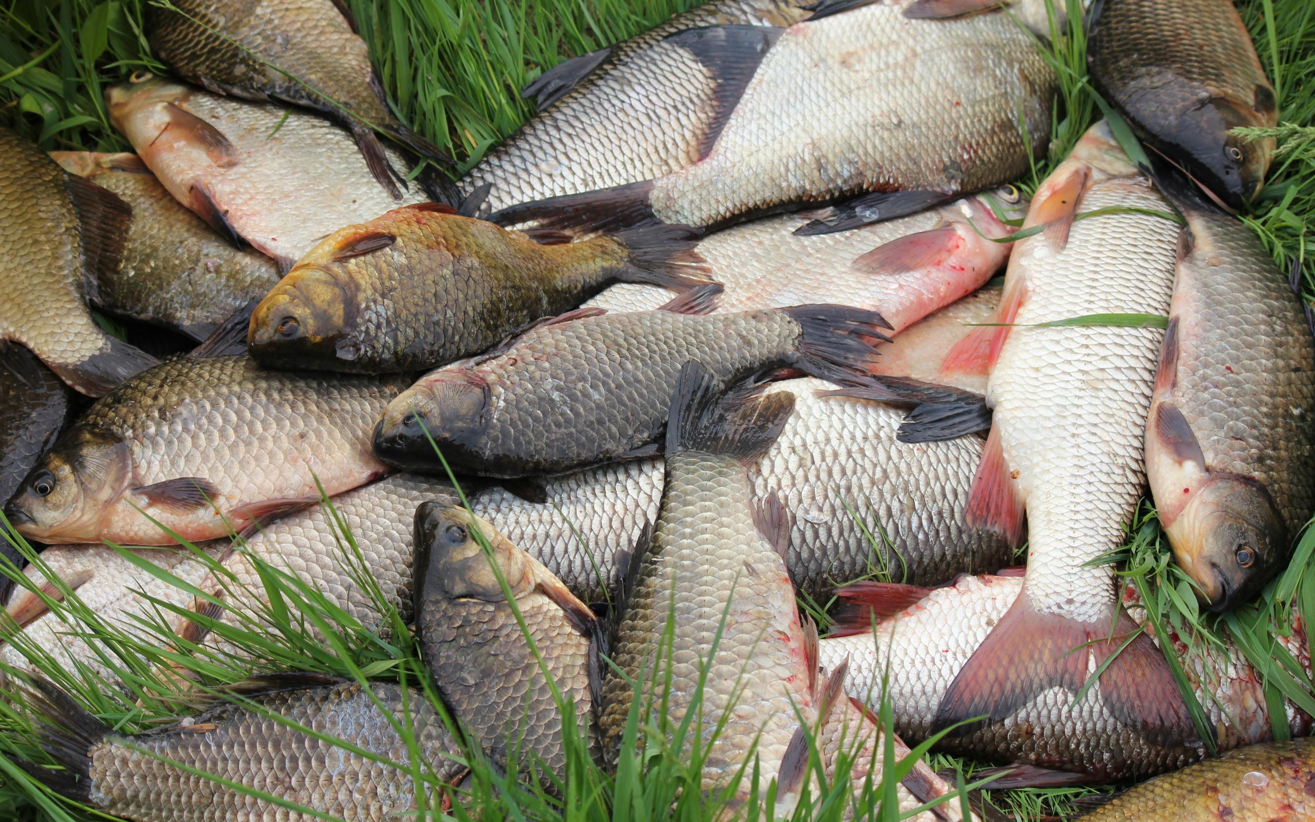 картинки где много рыбы любой