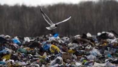 свалка, чайка над мусором