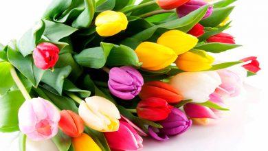 Букет тюльпанов на белом фоне
