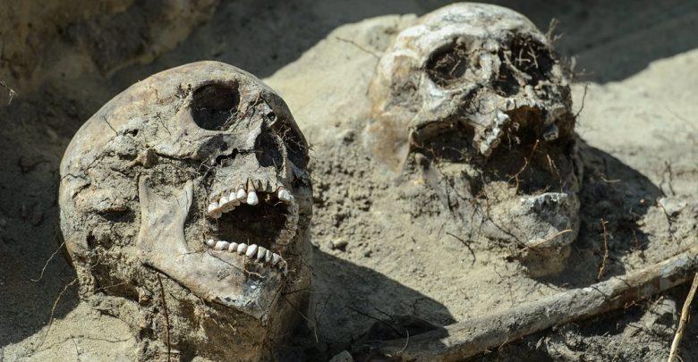 останки, череп