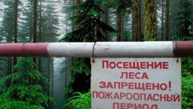 Таблична на шлагбауме предупреждающая о запрете посещения лесов