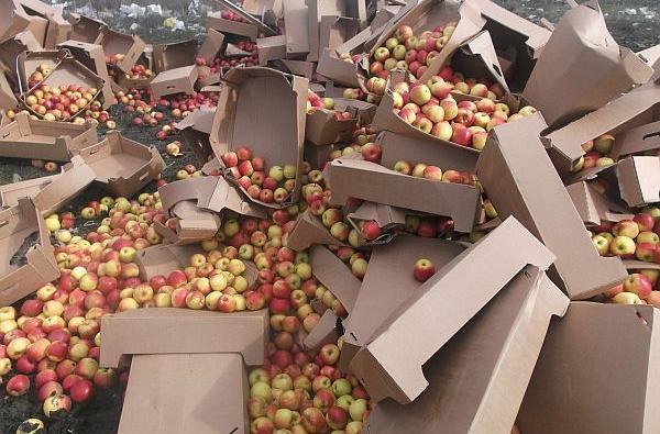Коробки с яблоками уничтожают на полигоне
