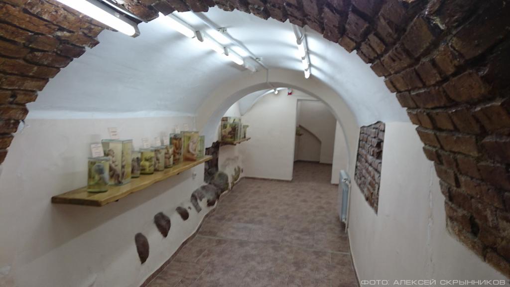 Кунсткамера в Гродно