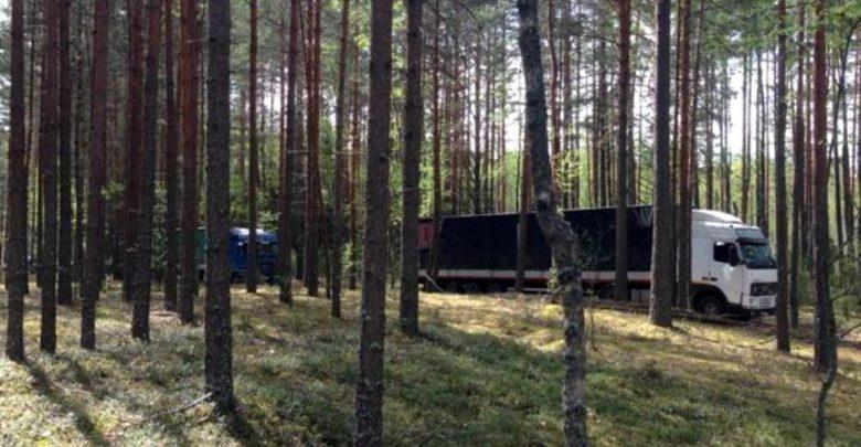 в России задержали 100 тонн яблок, ввезённых из Беларуси