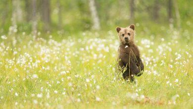 медведь на полянке