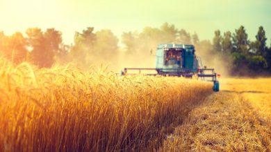 уборочная кампания, сбор зерна