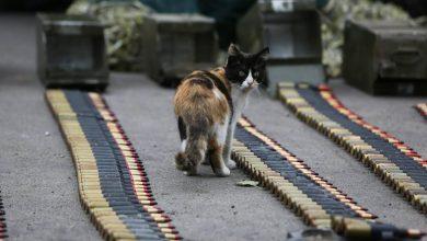 кот, война