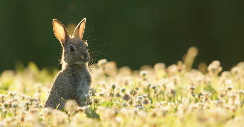 заяц на полянке в траве