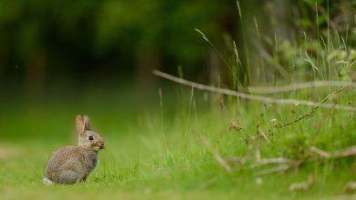 заяц в траве, лес