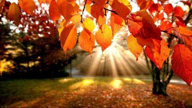 В Беларуси рекордно тёплый октябрь