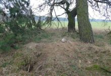 Фото обнаруженных останков под Брестом рядом с лисьей норой
