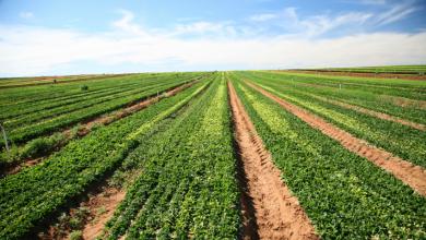 Photo of Беларусь и Россия наторговали сельхозпродукцией на 5,8 миллиарда долларов