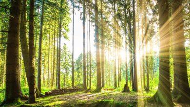 Photo of Запрет на посещение лесов введён в 60 районах Беларуси