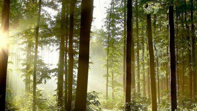 Photo of Запрет на посещение лесов действует в 78 районах Беларуси