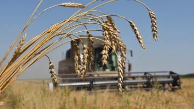 Photo of Урожай зерновых в Беларуси в этом году составит 10,3 млн тонн