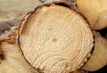 Photo of Лукашенко подписал указ о ведении лесного хозяйства и реализации древесины