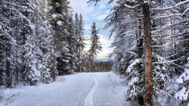 Photo of В лесу в Быховском районе насмерть замёрзла женщина