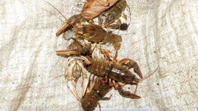 Photo of Завершено расследование дела о незаконной ловле рыбы и раков в Сенненском районе