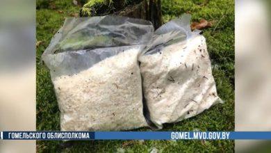 Photo of В Гомельской области сотрудники МВД вышли на наркосиндикат с товаром на сумму 230 тыс. долларов