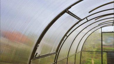 Photo of Как выбрать 4-метровую теплицу: советы экспертов