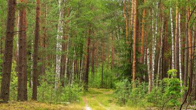 Photo of Ограничения на посещение лесов введены уже в 11 районах Беларуси