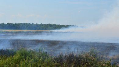 Photo of МЧС ликвидирует торфяной пожар на площади 85 га