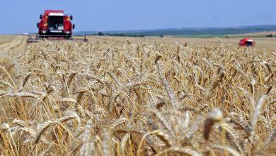 Photo of Лукашенко поставил задачи перед аграриями на период уборочной