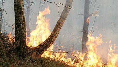 Photo of В Беларуси за сутки ликвидировано 4 лесных пожара