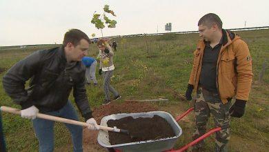 Photo of В Витебской области высадят более 1 тыс. деревьев и кустарников