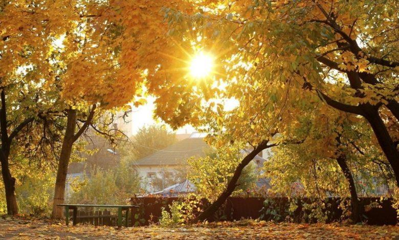 погода осенью, жёлтые листья на деревьях