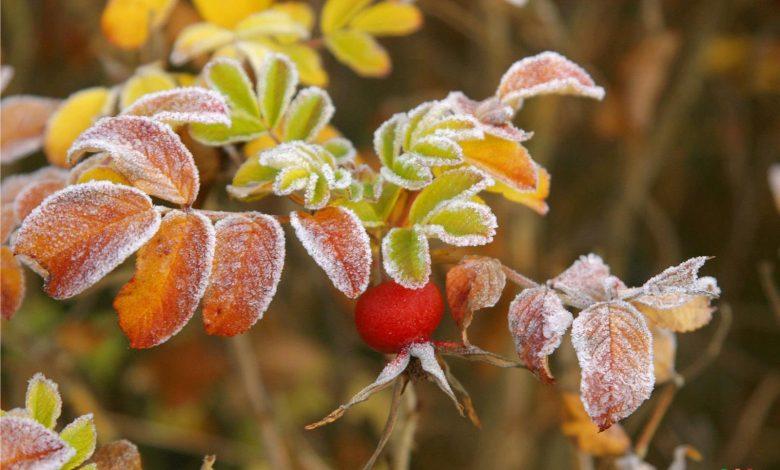 заморозки, природа, погода