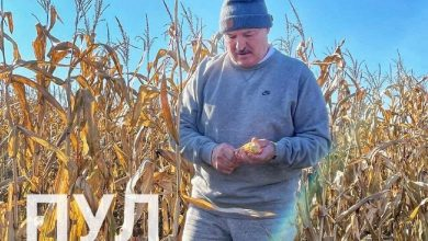 Photo of Лукашенко на родине инспектирует уборку кукурузы