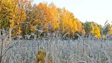 Photo of Ночные заморозки до -5 ожидаются в Беларуси
