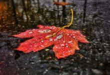 Photo of До +20°С и небольшие дожди ожидаются в Беларуси 21 октября